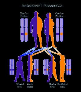 Autosomal-recessive-diseases